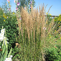 Sortiment - Gräser und Bambuspflanzen - Baumschule und Gärtnerei ...